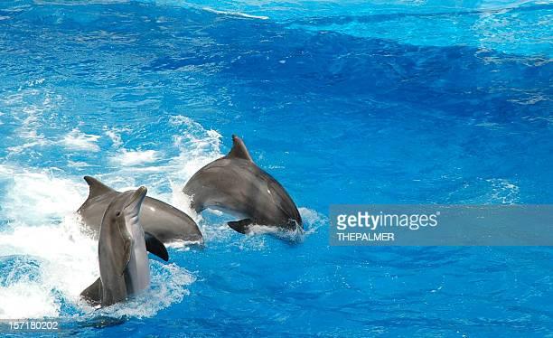 Golfinhos Mostrar
