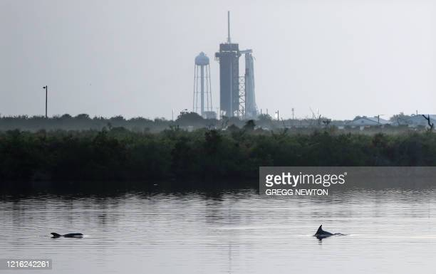 Dolphins swim in a lagoon near Launch Complex 39A at sunrise at Kennedy Space Center in Florida on May 30 2020 SpaceX is going ahead with Saturday's...