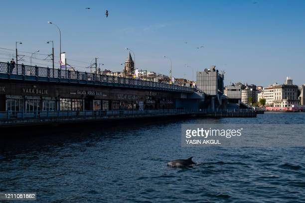 Dolphins swim under Galata Bridge in the Bosphorus strait, where sea traffic has nearly come to a halt on April 26, 2020 in Istanbul, as the city of...
