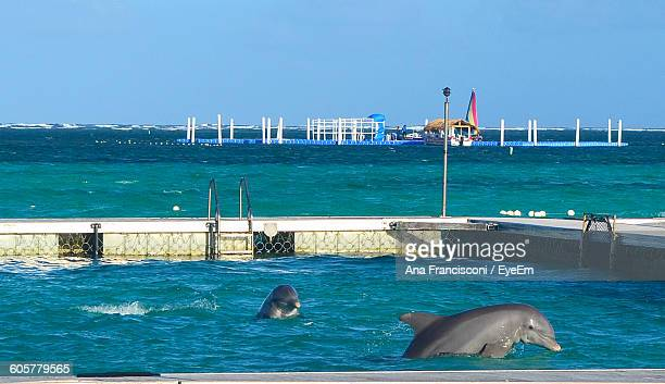 Dolphins Swimming In Pool By Sea Against Clear Sky