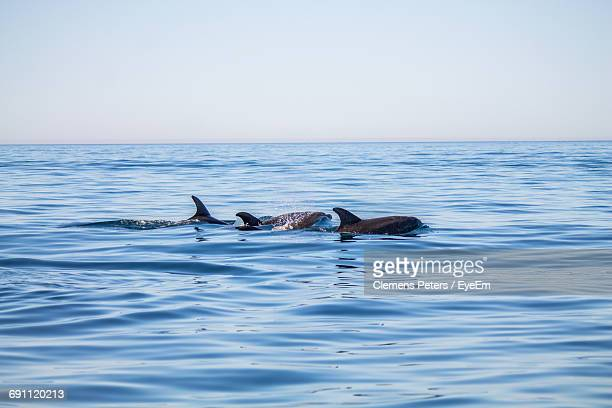 dolphins swimming in sea against sky - albufeira stock pictures, royalty-free photos & images