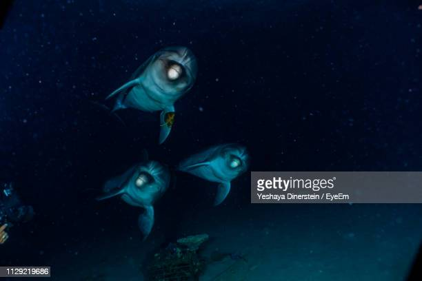 Dolphins Swimming Undersea