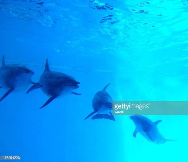 イルカの水中ブルーの水
