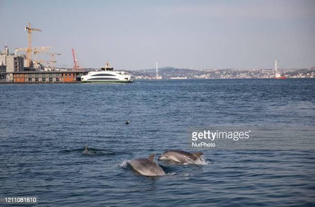 Dolphins take advantage of Turkey's lockdown to explore Istanbul's Bosphorus in Istanbul, Turkey, 26 April 2020. Turkeys Mosques remain closed due to...