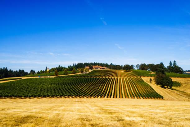 Domaine Serene Vineyard and Winery