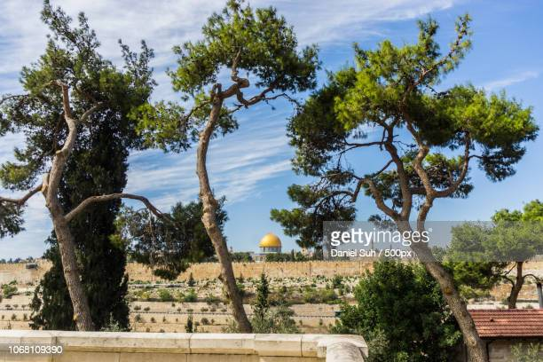 dome of the rock behind trees, jerusalem, israel - dome of the rock stock pictures, royalty-free photos & images