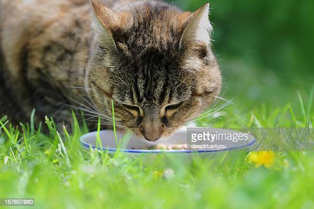 domestic cat in grass at meal