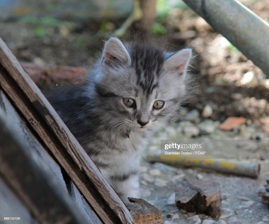 Domestic cat looking away : Stock Photo