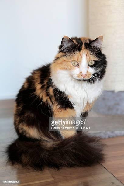 Domestic cat, portrait