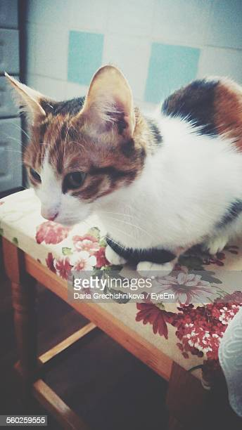 Domestic Cat Sitting On Floral Patterned Chair