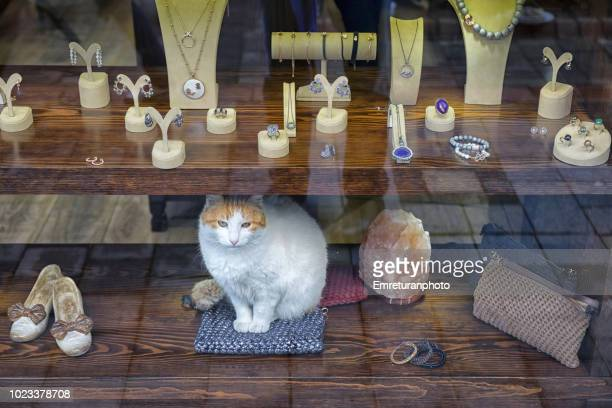 domestic cat sitting still in a jewellery shop window in the city. - emreturanphoto stock pictures, royalty-free photos & images