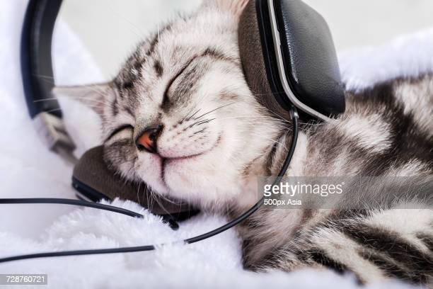 domestic cat sleeping with headphones on - image stock pictures, royalty-free photos & images
