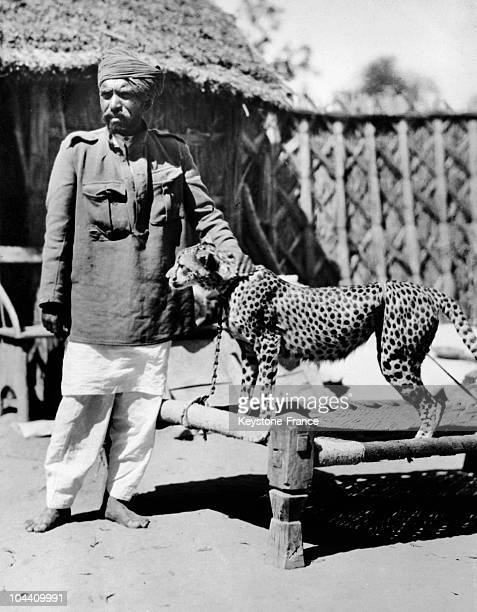 A domestic cheetah in India in the 30's and 40's
