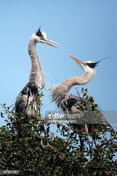 domestic disturbance - rookery stock pictures, royalty-free photos & images