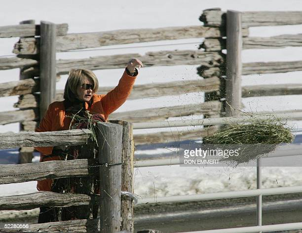 Domestic diva Martha Stewart throws hay to her horses on her property 05 March 2005 in Bedford New York Stewart left prison 04 March at the end of a...