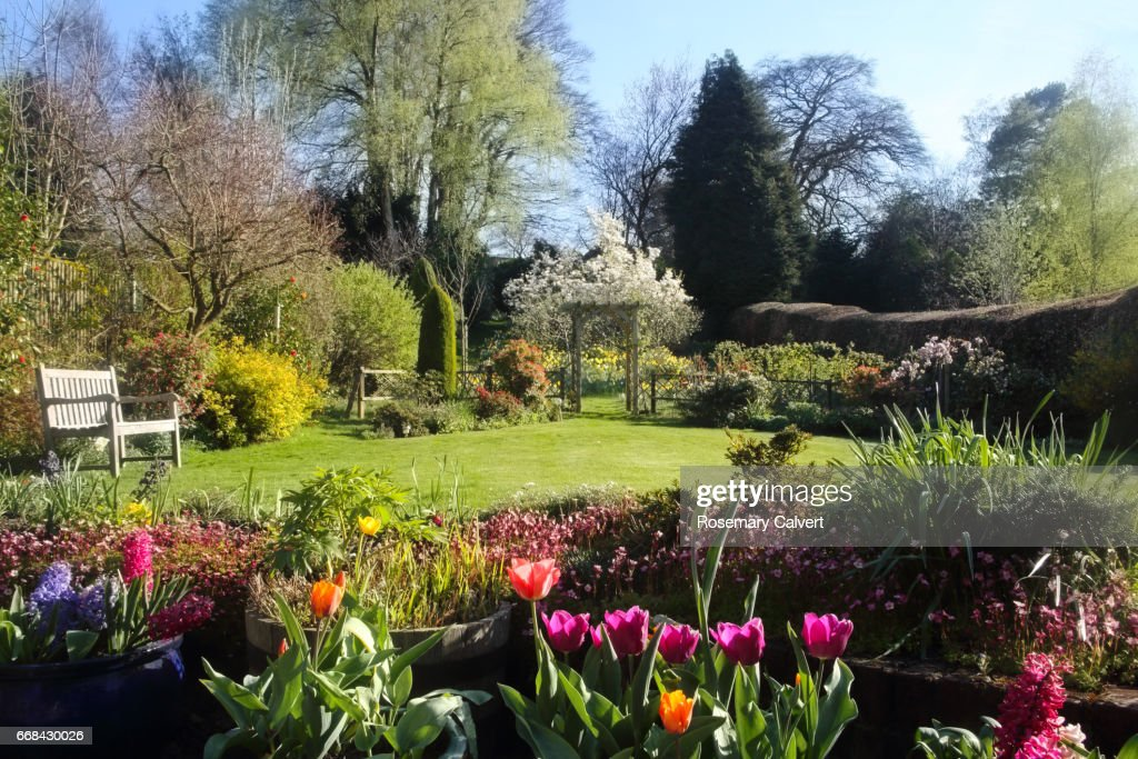 Domestic English garden full of flowers in spring. : Stock Photo