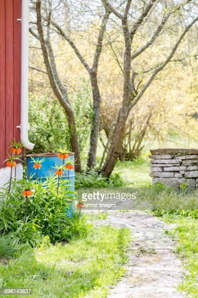 domestic garden - エーランド ストックフォトと画像
