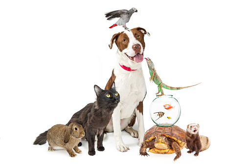 Domestic Pets Group Together With Copy Space 959740490