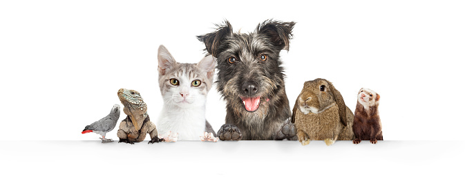 Domestic Pets Hanging Over White Website Banner 1006322426