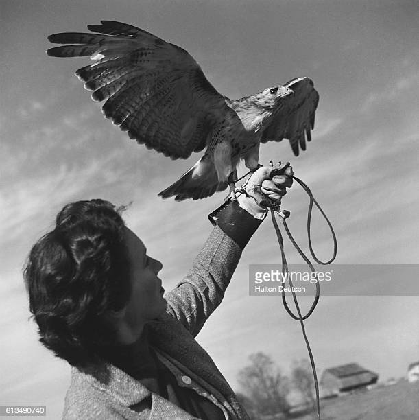 Domesticating the hawk is no warrant against cutting talons so a thick leather glove must be worn for protection
