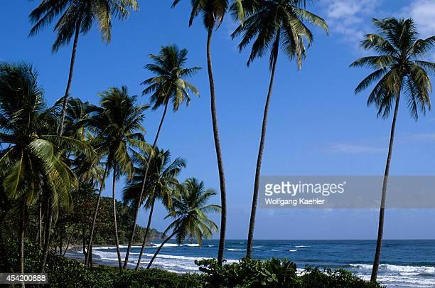 Dominica Coastline On Atlantic Ocean Side