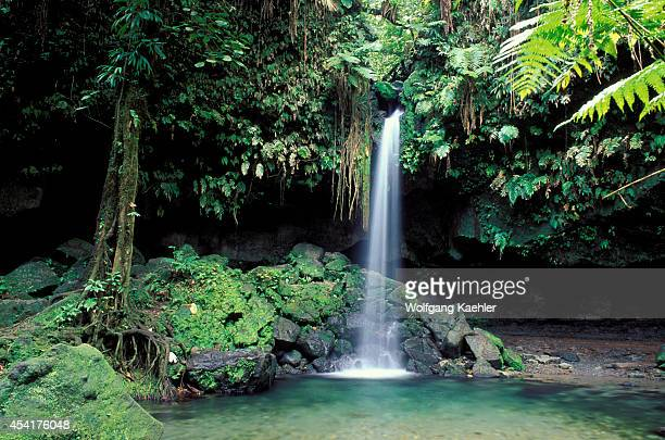 Dominica Rainforest Emerald Pool Waterfall
