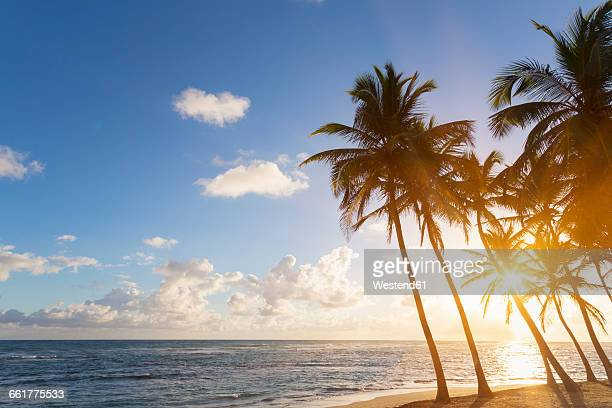 Dominican Rebublic, Tropical beach with palm trees at sunset