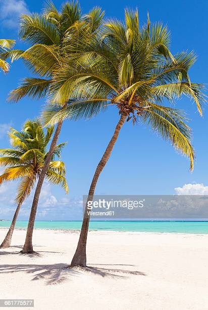 Dominican Rebublic, Tropical beach with palm trees
