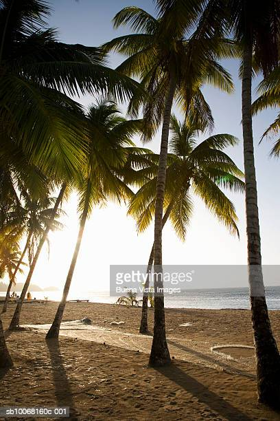 Dominican Republic, Puerto Plata, palm trees on beach at sunset