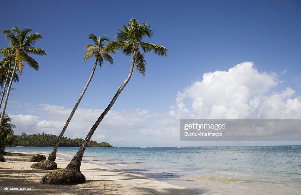 Dominican Republic, Puerto Plata, palm trees on beach : Stock Photo