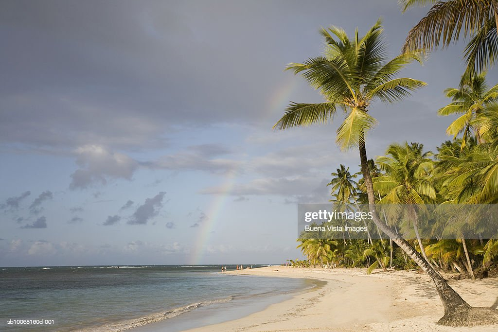 Dominican Republic, Puerto Plata, rainbow over palm trees on beach : Stock Photo