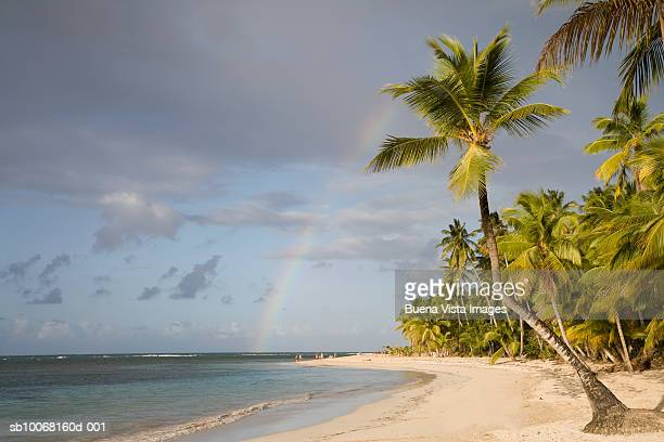 Dominican Republic, Puerto Plata, rainbow over palm trees on beach
