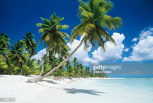 dominican republic, saona island, palm trees on beach - paisajes de republica dominicana fotografías e imágenes de stock