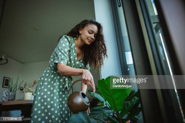dominican woman,watering flowers in her apartment - watering stock pictures, royalty-free photos & images
