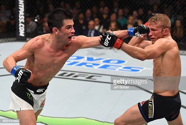 Dominick Cruz punches TJ Dillashaw in their UFC bantamweight championship bout during the UFC Fight Night event inside TD Garden on January 17 2016...