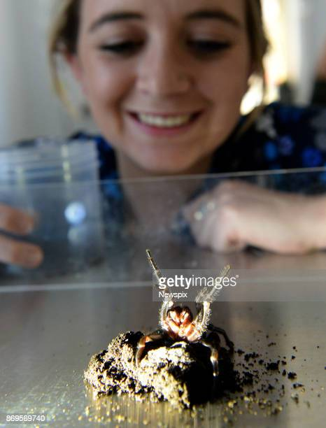 SYDNEY NSW Dominique Both with a funnel web spider that was recently handed in to the Mona Vale Vet Clinic in Sydney New South Wales Kane Christensen...