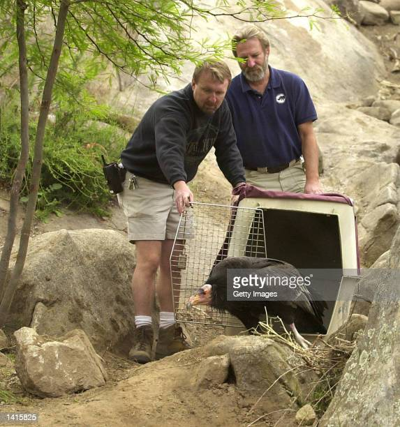Don Sterner and Chuck Borden introduced two adult California condors to their new home at Condor Ridge the San Diego Wild Animal Park''s newest...