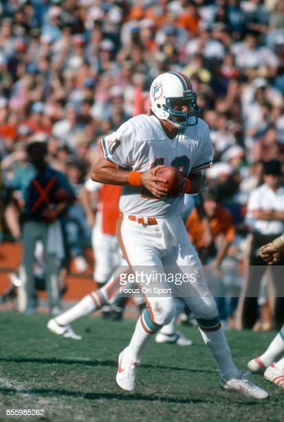 Don Strock of the Miami Dolphins drops back to pass during an NFL football game circa 1981 at the Orange Bowl in Miami Florida Strock played for the...