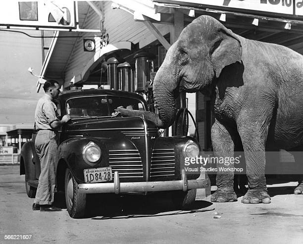 Donald McKay owns a gas station and invited his friend Captain Rudy a wellknown animal trainer and Rudy's elephant Jumbo to help out at the gas...