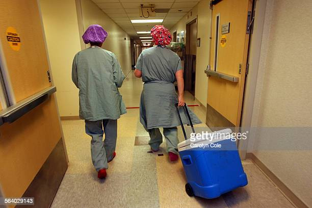 A donated liver arrives at the operating room at the Mayo Clinic in Jacksonville Florida A patient is already in the operating room waiting for the...