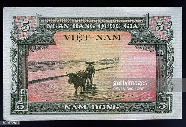 5 dong banknote reverse plow pulled by buffalo in a rice paddy South Vietnam 20th century