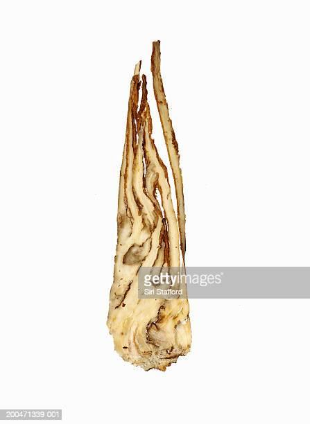Dong quai root (Angelica sinensis)