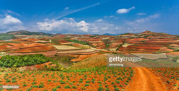 Dongchuan red earth terraces