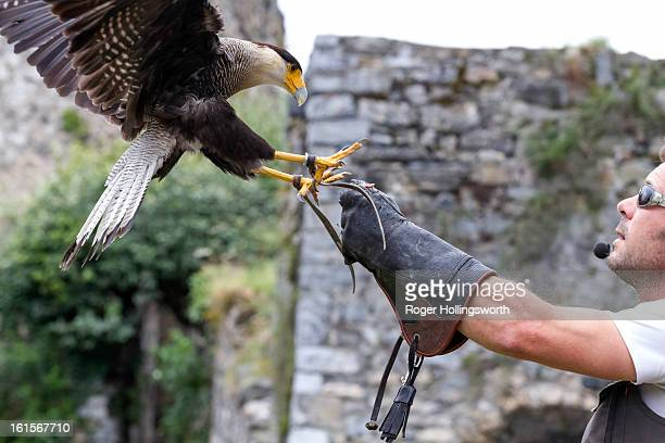 Donjons des Aigles, The castle of Beaucens, in the Hautes Pyrénées, houses one of the most prestigous collections of birds of prey : Kites, Vultures,...