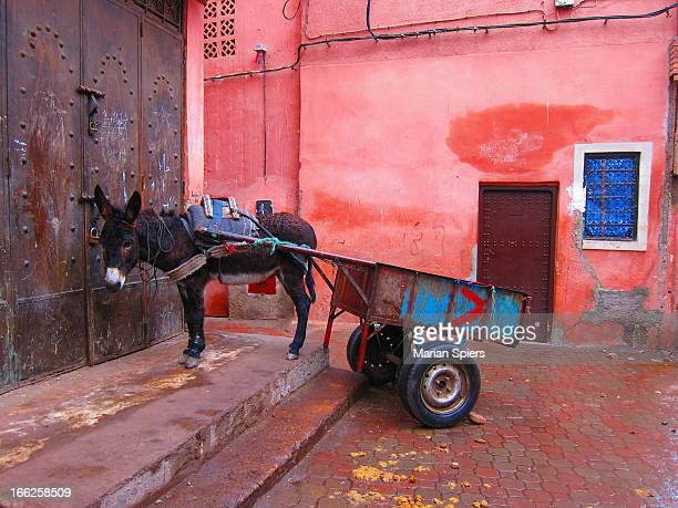 donkey and cart! - animal powered vehicle stock photos and pictures