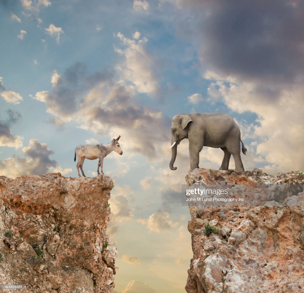 Donkey and elephant separated by gap in cliff : Stock Photo