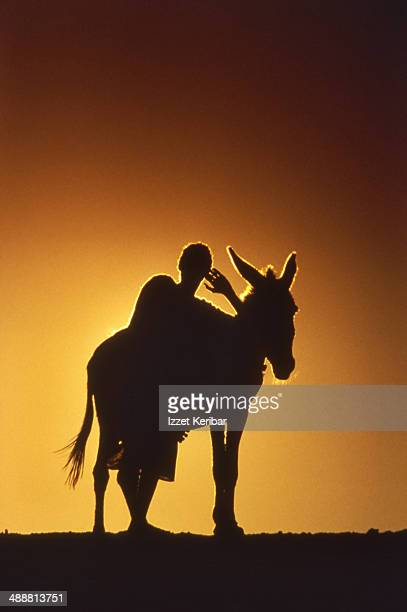 a donkey and his master, merzouga - donkey stock pictures, royalty-free photos & images