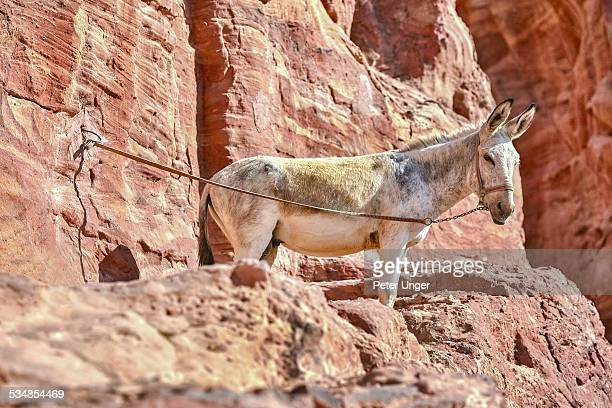 Donkey awaits on the sandstone cliff