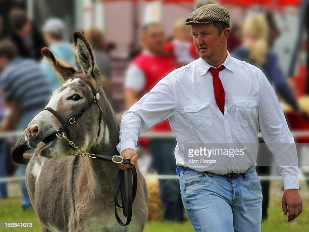 Donkey being shown by its owner in one of the classes at Armagh Show 2011. It is held each year in Gosford Forest Park, Markethill.