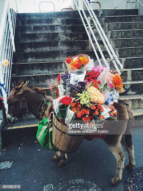 Donkey Carrying Flower Bouquet Against Staircase